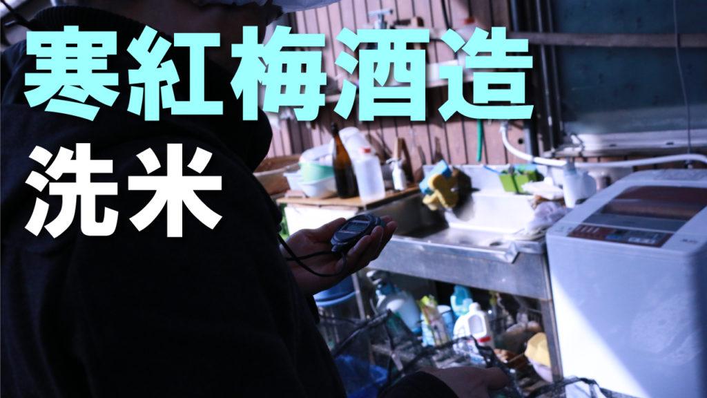 寒紅梅酒造 酒造り体験レポート第四回「洗米・浸漬/仲仕事」
